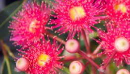 native-gardens-south-west-busselton-dunsborough-yallingup-quindalup-eagle bay